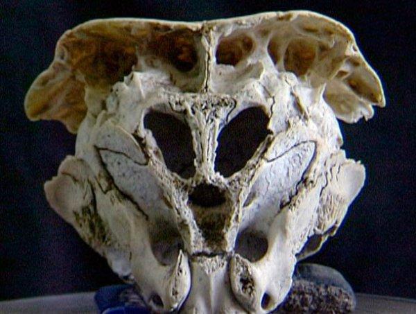 alien-skull-Rhodope na Bulgária2
